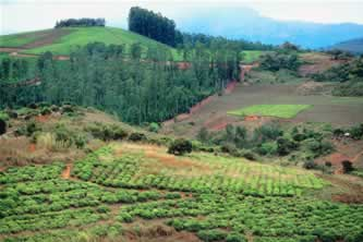 farmed countryside in Africa