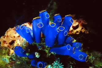 colorful underwater invertebrate