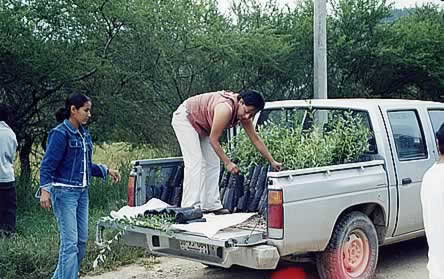 photo of young women in a green land unloading a pickup truck