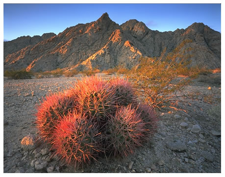 Tinajas Altas mountains, with cottontop cactus in foreground — photo by Jack Dykinga