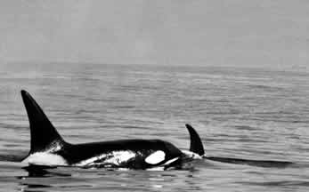orcas, photos.com