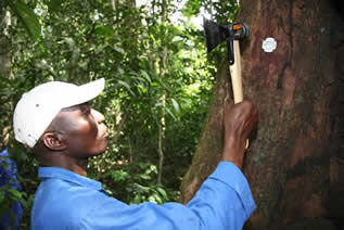 photo of a man using a hammer-shaped handheld scanner on a small tag on a tree