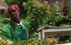 photo of a woman in factory garb working with plants
