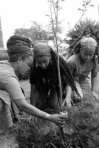 photo of women planting a small tree