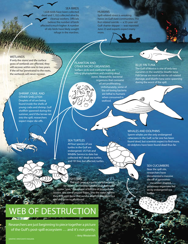 informative graphic, detailing the damage caused by the spill on humans, animals, plants, and ecosystems