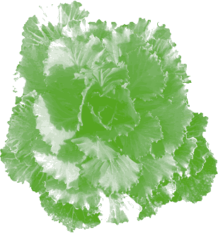 artwork of green kale