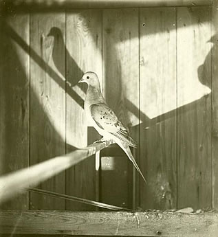 photo of a bird in a wooden cage