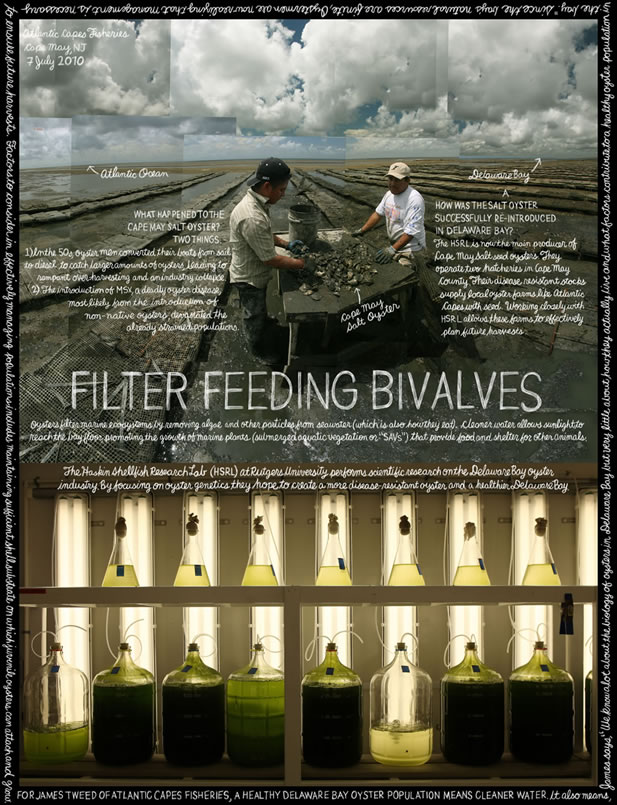 collage image showing a crew sorting oysters on a shore and a laboratory full of glassware and light, titled Filter Feeding Bivalves