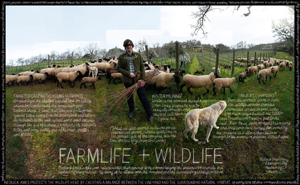 collage depicting farm life, words describing assorted activities and the title Farm Life + Wildlife