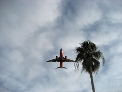 image showing a jet flying past a palm tree