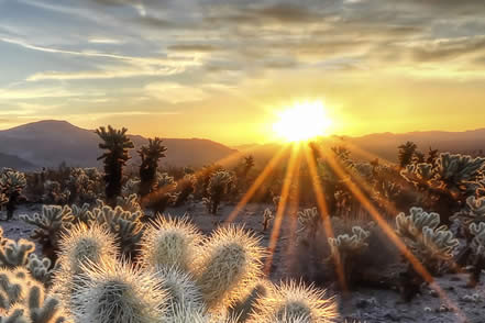 photo of cactu in a lush desert at sunrise