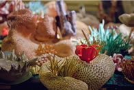photo of an artwork depicting corals and other seafloor creatures