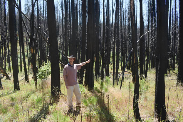 photo of a man gesturing in a burned forest