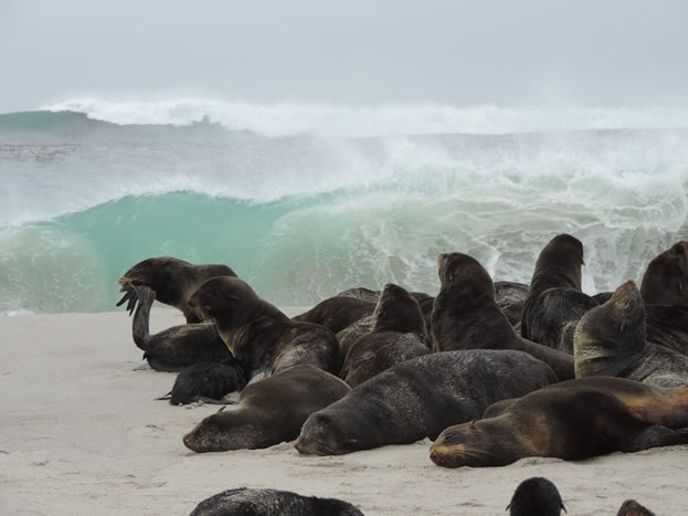 photo of pinnipeds gathered on a beach