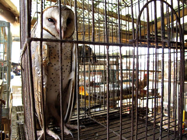 photo of an owl in a cage at a market