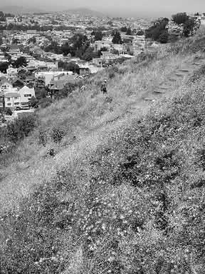 photo of a path through a steep meadow, cityscape in the background