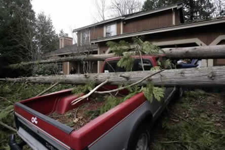 photo, pickup truck under fallen trees in front of a house