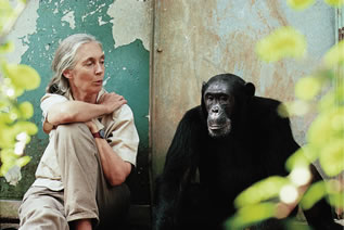photo of a woman speaking to a chimpanzee