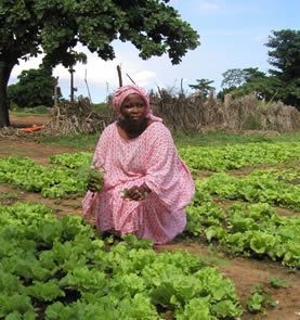 photo of a woman working in a field of lettuce