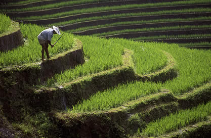 photo of a man working on terraced rice fields