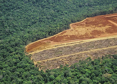 aerial photo of a clearcut