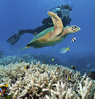 photo of a turtle and diver underwater