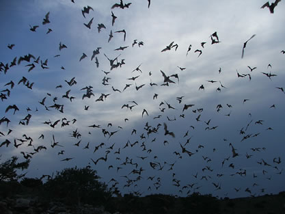 photo of many bats flying in twilight