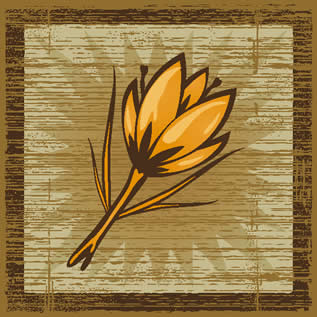 woodcut-style graphic depicting a crocus