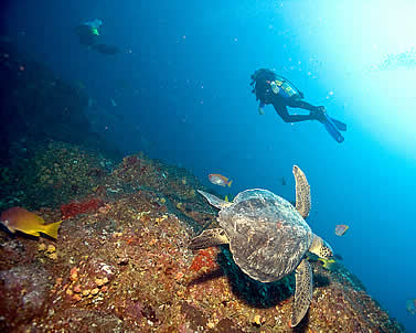 underwater photo of a turtle and a a diver on a reef