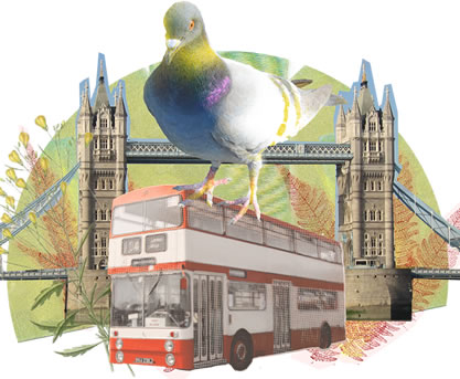 photo collage of a pigeon riding on a double-decker bus near the tower bridge