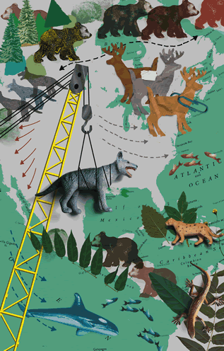 collage artwork depicting a map of North America and animals, a crane lowering a wolf onto the map