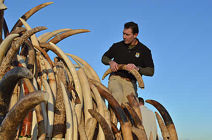 photo of a uniformed man inspecting a pile of elephant ivory