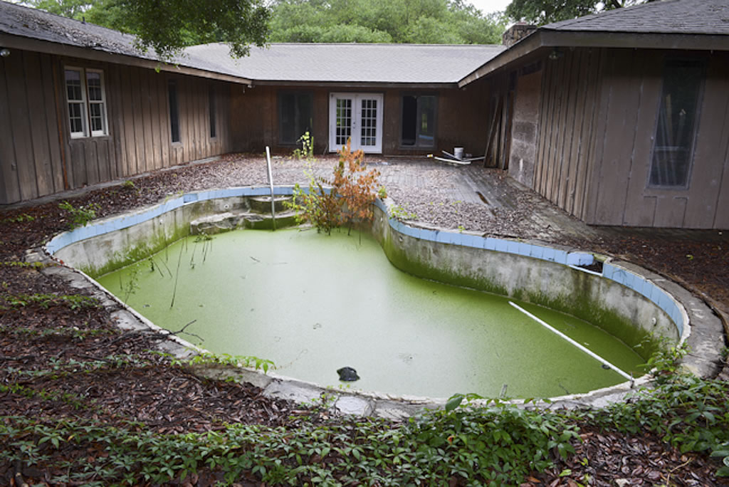 Photo Of A Swimming Pool Covered In Duckweed And Algae Reeds Growning Through