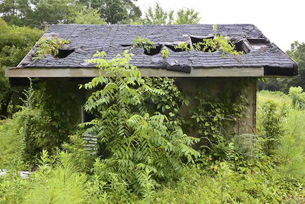 photo of a building overtaken by plants