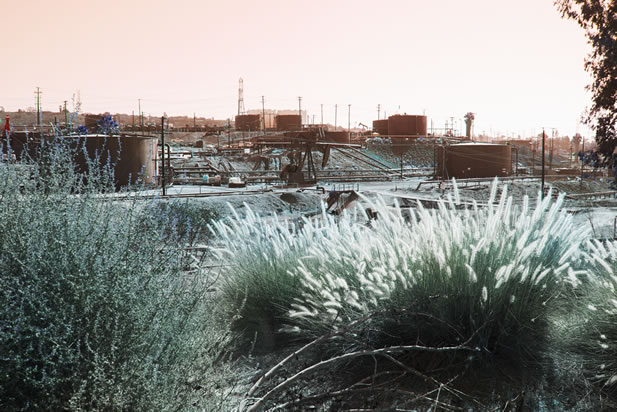tinted photo of a refinery-like tank farm, pumpjacks and other equipment, fronted by wildflowers and grasses