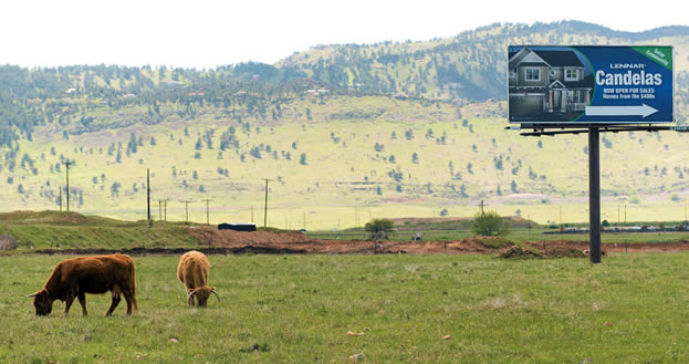 photo of grazing cattle, green hills in the background, and a sign advertising a housing development