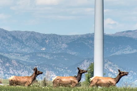 photo of elk grazing in a wide grassland, tower of a wind turbine and tall mountains behind them