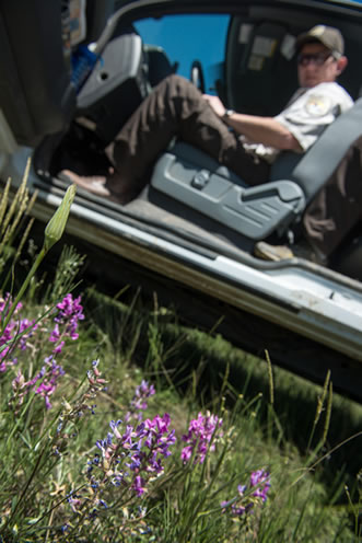 photo of a man in a vehicle, wildflowers in the foreground