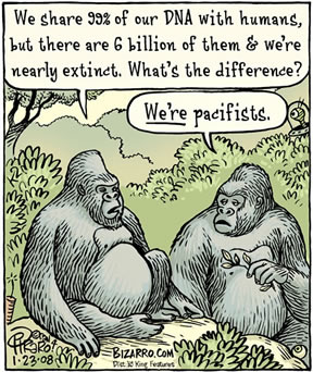cartoon drawing, two gorillas talking: We share 99% of our DNA with humans, but there are 6 billion of them and we're nearly extinct. What's the difference? We're pacifists.