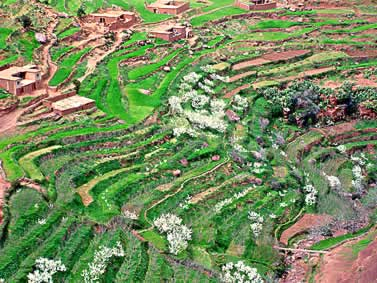 photo of terraced fields interspersed with dwellings, aerial view