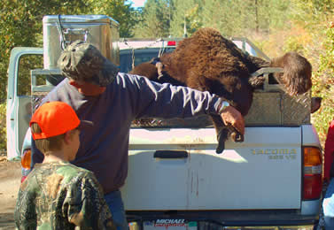photo of a man showing a child the tongue on a bear carcsse lying in a pickup truck