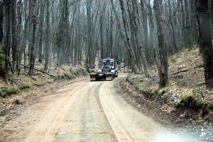 photo of a truck traversing a dirt logging road through a forest