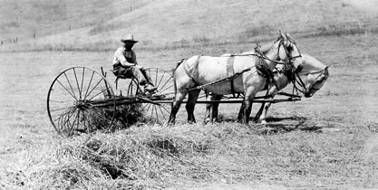 old photo of a horse-drawn plow
