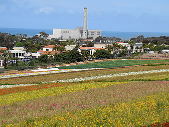 photo of a seaside power plant, apparently a flower farm in the foreground