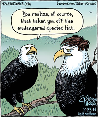 cartoon of bald eagles; one wearing a toupee, the other worrying a threat of endangered-species status