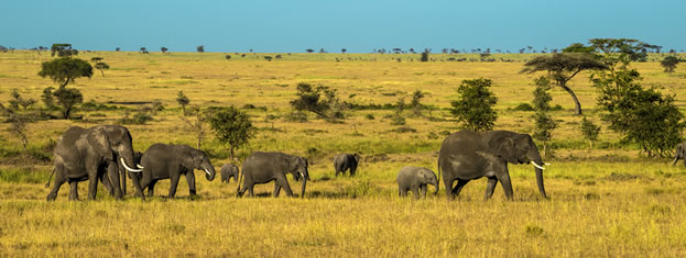 photo of elephants on a wide grassy plain