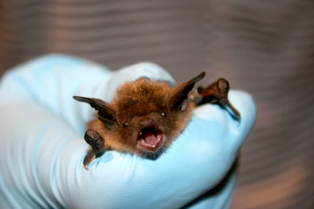 photo of a gloved hand, holding a bat in some distress