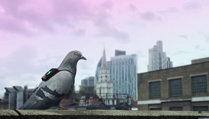 photo of a pigeon, wearing a tiny backpack, on an urban rooftop
