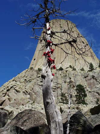 photo showing a wizened tree festooned with colored ties, giant rock monolith showing behind
