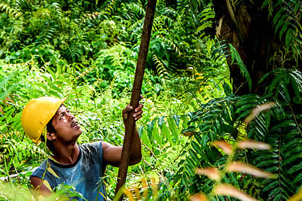 photo of a man with a hardhat working in a palm orchard